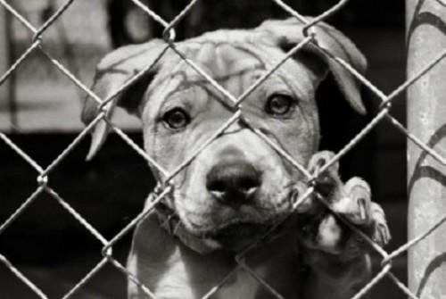 Un cane maltrattato subisce le carezze per la prima volta