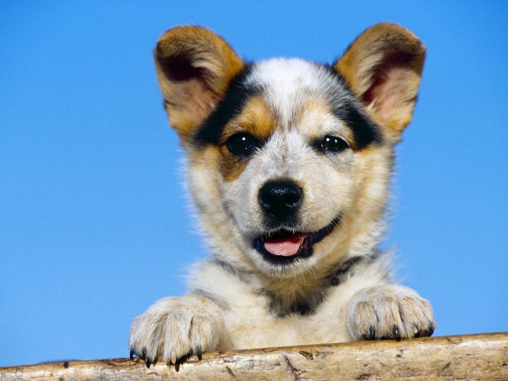 Guardate l'amore di questo cane verso il suo padrone