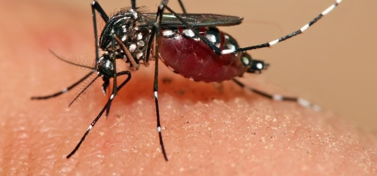 Virus: nuova allerta virus, si chiama zika
