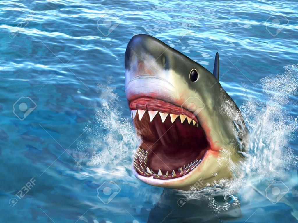 Autopsia di uno squalo, una pecora nella pancia.