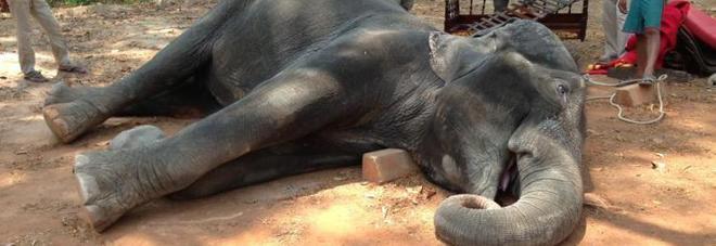 Elefante morto di stanchezza, nel mentre trasportava i turisti