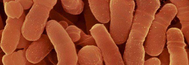 Scoperto batterio killer resistente agli antibiotici