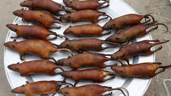 Carne di topo finalmente legale anche in Italia