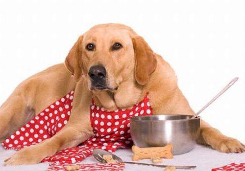Allerta! Plastica nel cibo per cani, ecco quale marca.