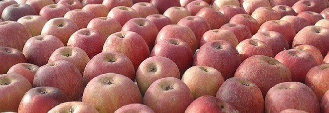 Il succo di mela è un potentissimo antitumorale, ecco perchè