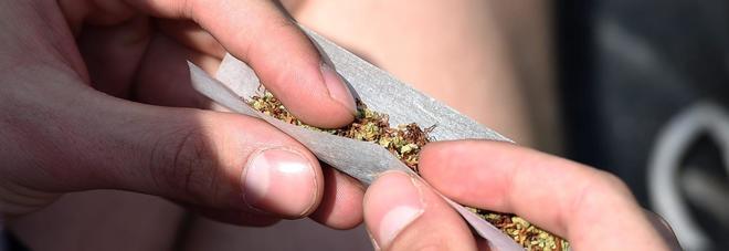 Liberalizzazione della cannabis? La droga leggera non esiste