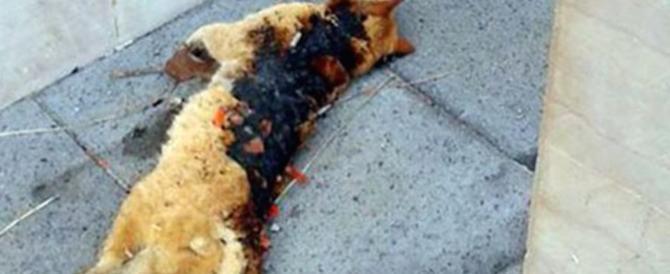 Gatto ucciso dai petardi, una taglia da 10mila € sui torturatori