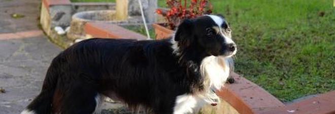 Il cane fa pipì sul cestino: multa da 157 euro.