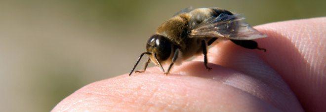 Vieni punto da un ape? Che fare?