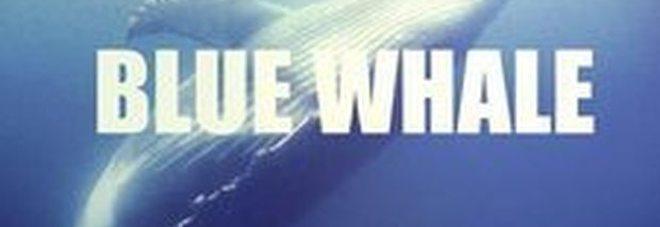 """Allarme Blue Whale: """"In Italia almeno duemila ragazzi coinvolti"""""""