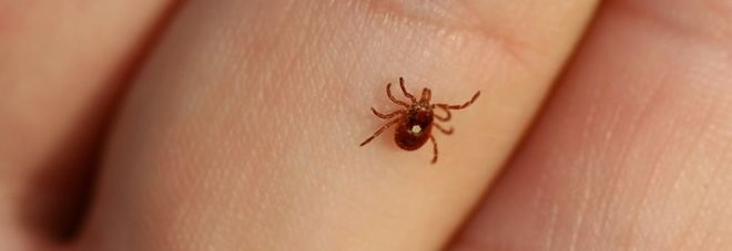 Arriva il nuovo virus delle zecche, contagioso e mortale.