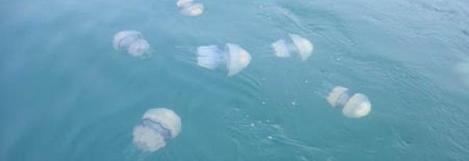 Puntura di medusa, cosa fare e cosa non fare?