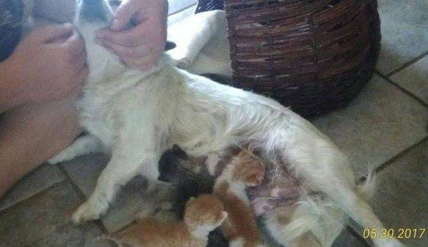 Cagnolina trova 3 cuccioli nell'immondizia e li salva allattandoli.
