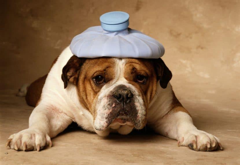 Hai un cane? Hai diritto a 450€ mensili, scopri come, padroni che abbandonano i cani hanno le ore contate