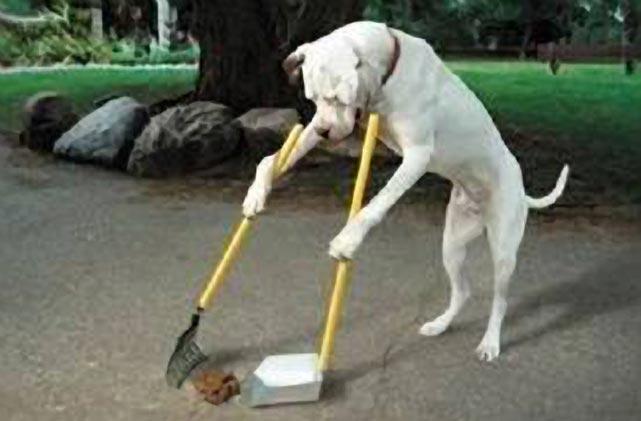 Le cacche dei cani, un problema di civiltà e igiene urbana