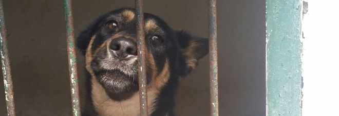 La padrona l'abbandona ad un palo, la cagnolina l'aspetta, in cerca di adozione