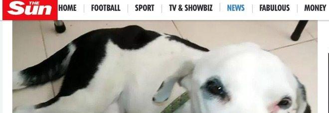 Nuvola il cane abbandonato in aeroporto, aspetta in vano il suo padrone, morto di crepacuore
