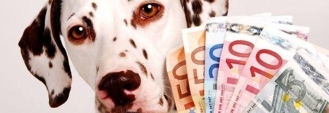 Amici a quattro zampe? Ma quanto sono costosi? Una buona notizia per i nostri cani e gatti
