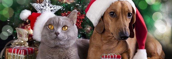 Cani e gatti, paura dei botti, consigli per mettere in sicurezza i nostri amici