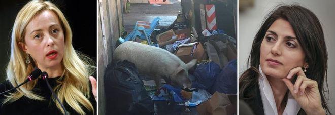 """La Raggi sfida la Meloni, è una fake news: """"Quel maiale è di un Casamonica!"""""""