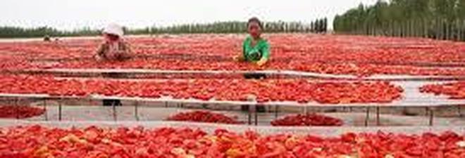Treno merci con pomodoro cinese, in 25 giorni da Urumqi a Napoli