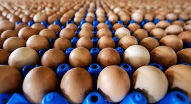 Cucinare uova nel microonde può essere pericoloso, lo conferma uno studio