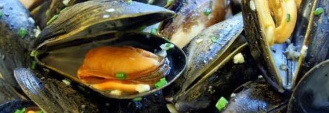 Cozze dalla Spagna contaminate da un batterio pericoloso, allarme in Italia