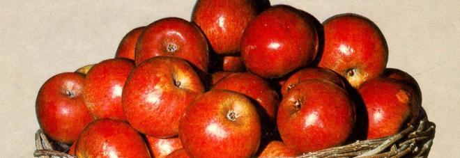 La mela annurca rimedio per la caduta dei capelli duranta la chemioterapia.