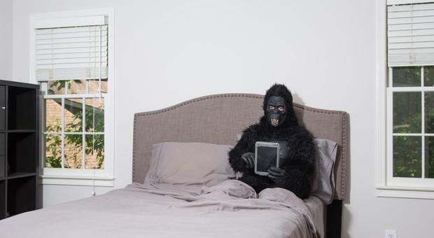 I letti degli umani sono più sporchi di quelli degli scimpanzè