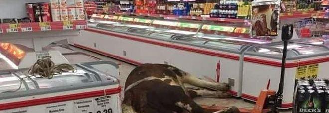 Mucca fuggita dal mattatoio si rifugia in un supermercato, uccisa, virale sui social.