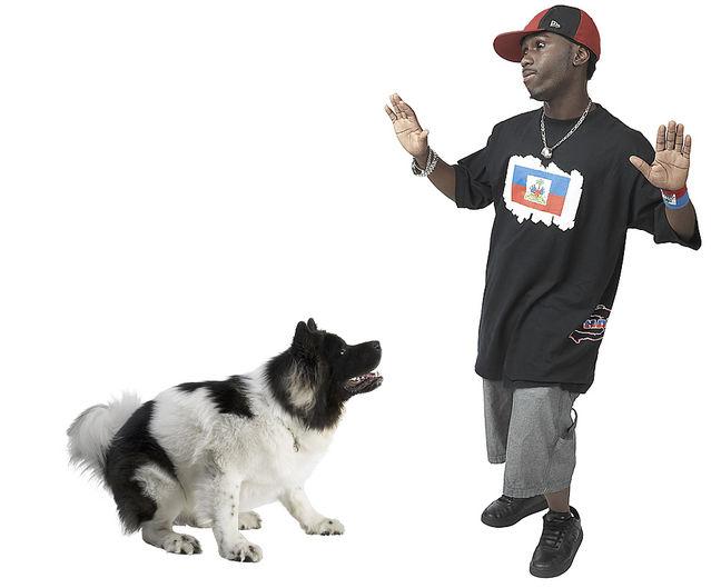 """Il cane razzista di Alassio, """"Abbaia solo ai neri, ma quelli poveri""""."""