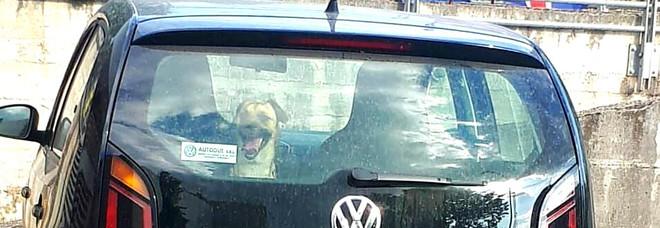 Cane lasciato in auto al sole, ancora maltrattamenti contro animali.