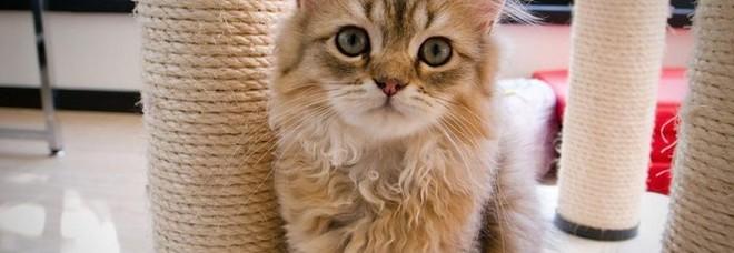 Attenzione al gatto, un parassita fa male al cervello