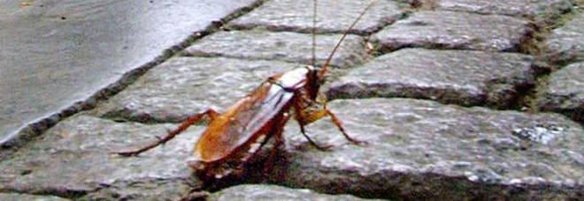 San. Valentino, l'iniziativa di una zoo: dare il nome di un ex ad uno scarafaggio per vendetta.