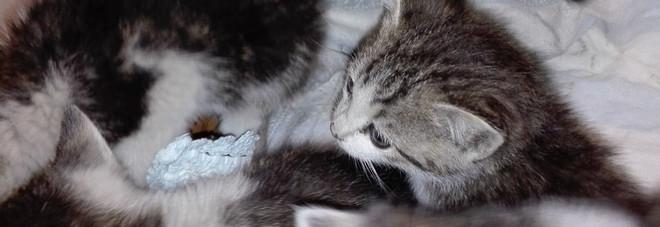 Pattuglia della polizia, nota 5 gattini sull'autostrada e li salva.