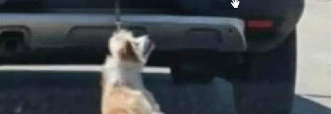 Cane legato e trascinato da un auto, adesso il proprietario minaccia di denunciare chi ha girato il video.