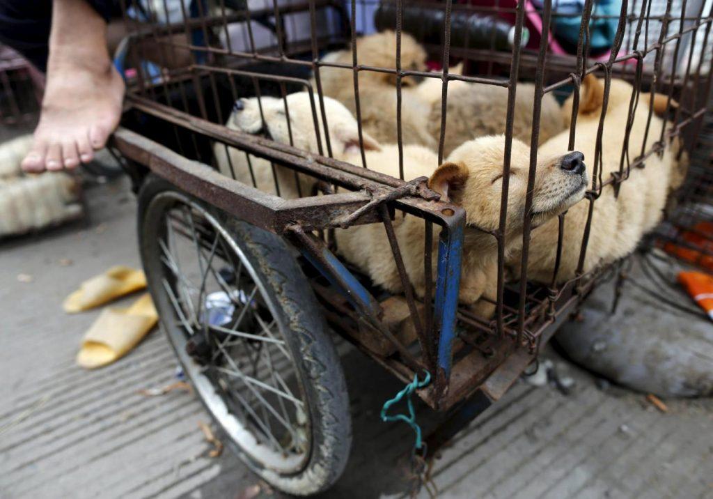 Regno Unito: bocciato il divieto di mangiare cani e gatti