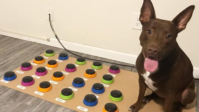 Stella, il cane che conosce 29 parole e sa comporre frasi -VIDEO- La Stampa ➥