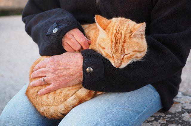 I gatti fanno bene al cuore, allungano la vita e allontanano stress e depressione-FanPage➥