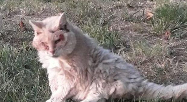 Micia, la gatta livornese compie 32 anni e diventa la più longeva di sempre in Italia-LEGGO ➥