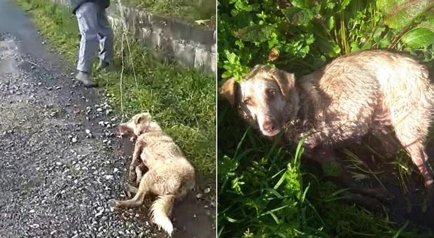 Spagna, picchia e spara al suo cane trascinandolo in strada: «Sono cacciatore, sparo a chi c...o mi pare-LEGGO➥