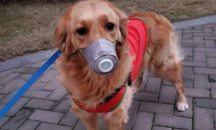 Coronavirus, cane positivo a Hong Kong: c'è la conferma dell'Oms. Scatta la quarantena-LEGGO➟